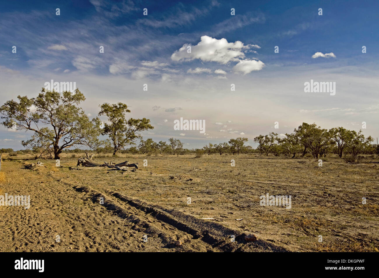Arid Australian outback landscape during drought with barren brown plains, sparse vegetation, blue sky and white clouds - Stock Image