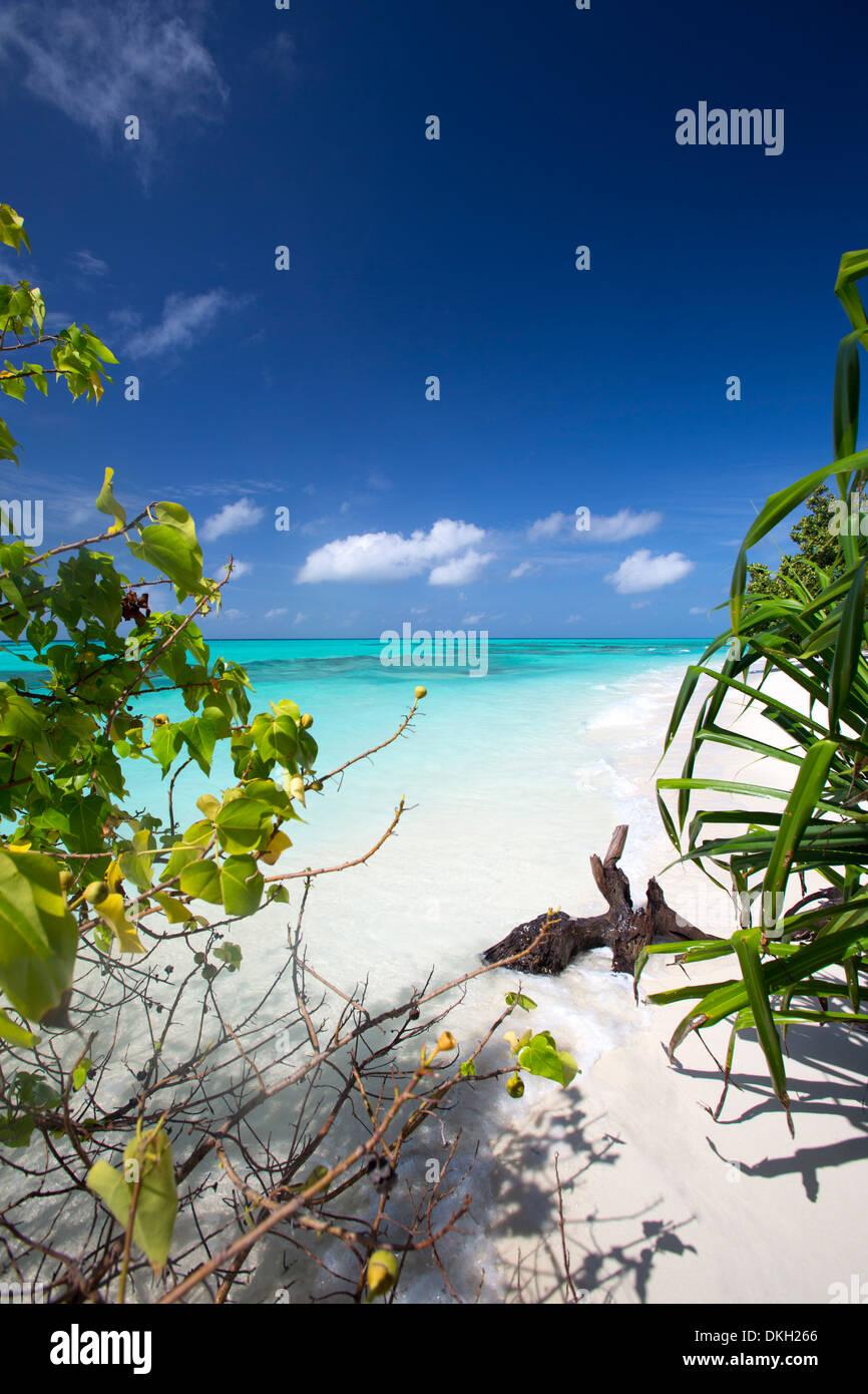 Beach on desert island, Maldives, Indian Ocean, Asia - Stock Image