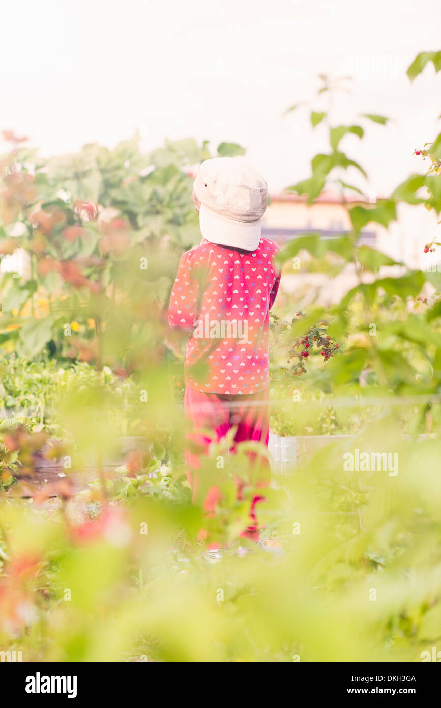 Back view of young child standing in garden watching green plants and flowers - Stock Image