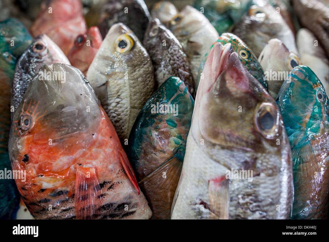 A collection of fish for sale in Kudat fish market, Sabah, Malaysian Borneo, Malaysia, Southeast Asia, Asia - Stock Image