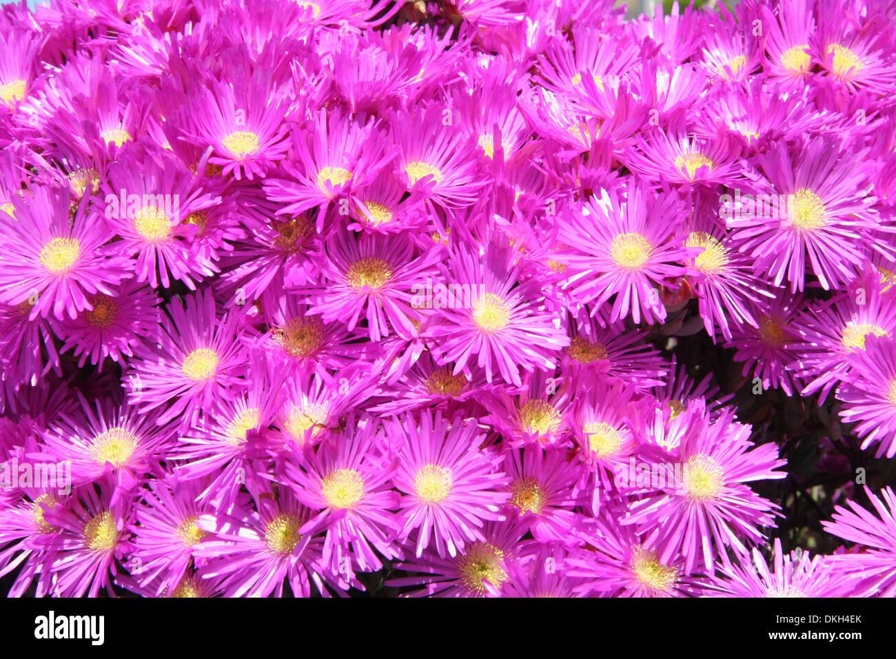 Long Thin Petals Stock Photos Long Thin Petals Stock Images Alamy