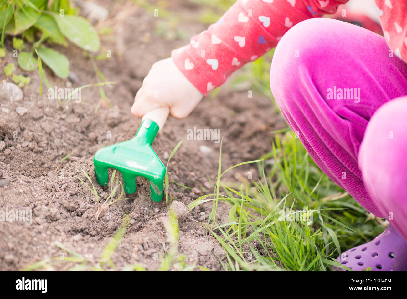 Close up of young child in garden helping with plants and flowers, digging in the soil. - Stock Image