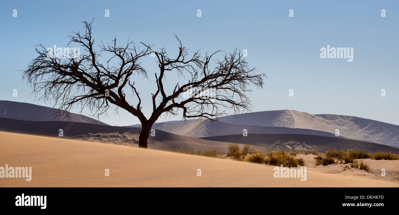 Tree at the foot of Dune 45, with dunes rendered silver and purple by the afternoon sun, Namib Naukluft, Namibia, Stock Photo