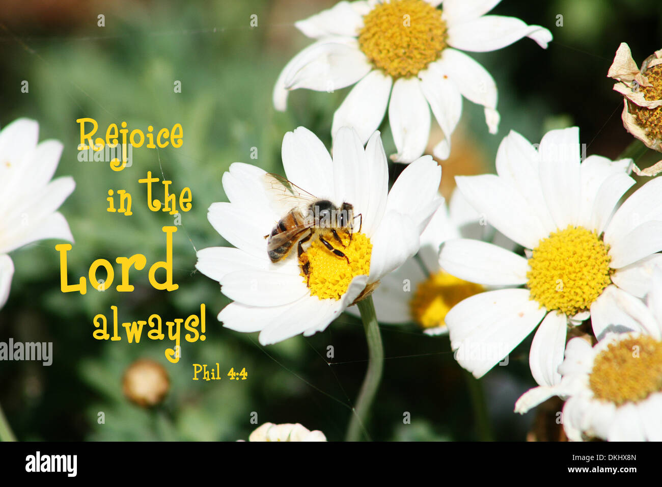 an inspirational bible verse from phillipians 4 4 rejoice in the