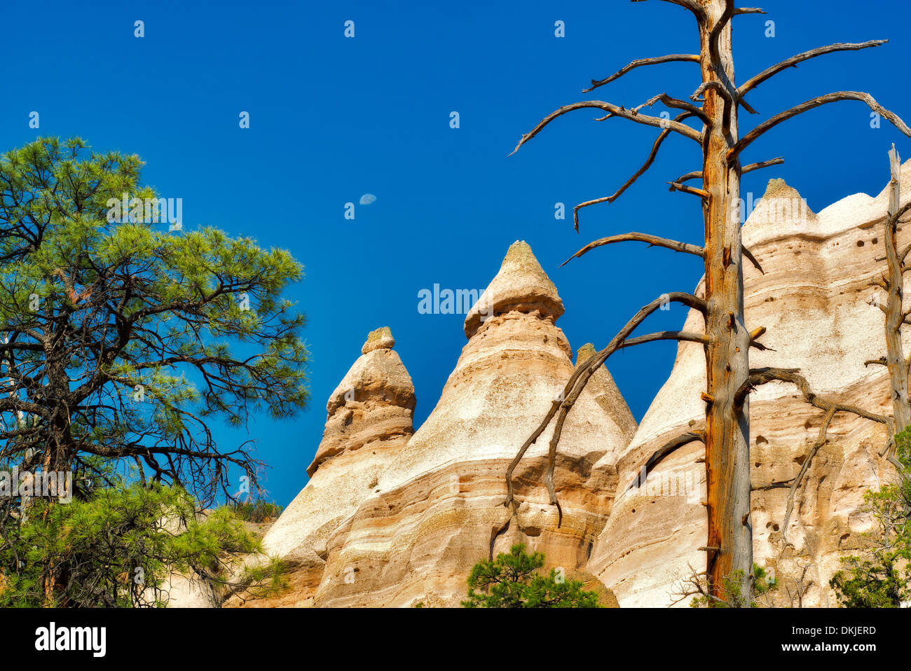 Dead tree, moon and rock formations in Tent Rocks National Monument, New Mexico - Stock Image