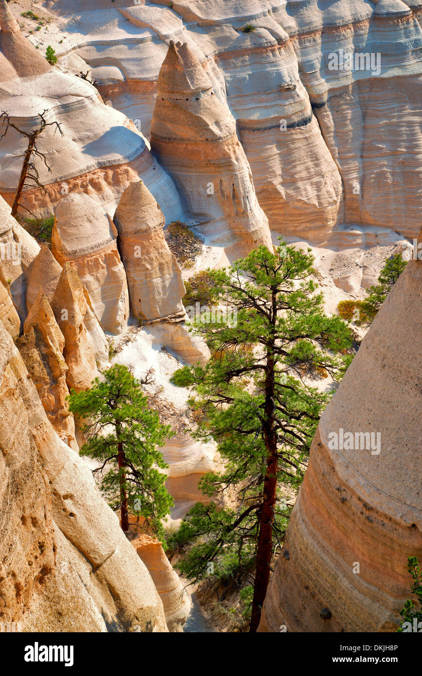 Rock formations and struggling ponderosa pine tree in Tent Rocks National Monument, New Mexico. - Stock Image