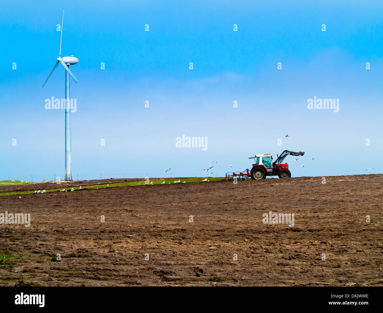 Farmer ploughing a field with wind turbine in background and gulls behind red tractor Isle of Tiree Inner Hebrides Stock Photo