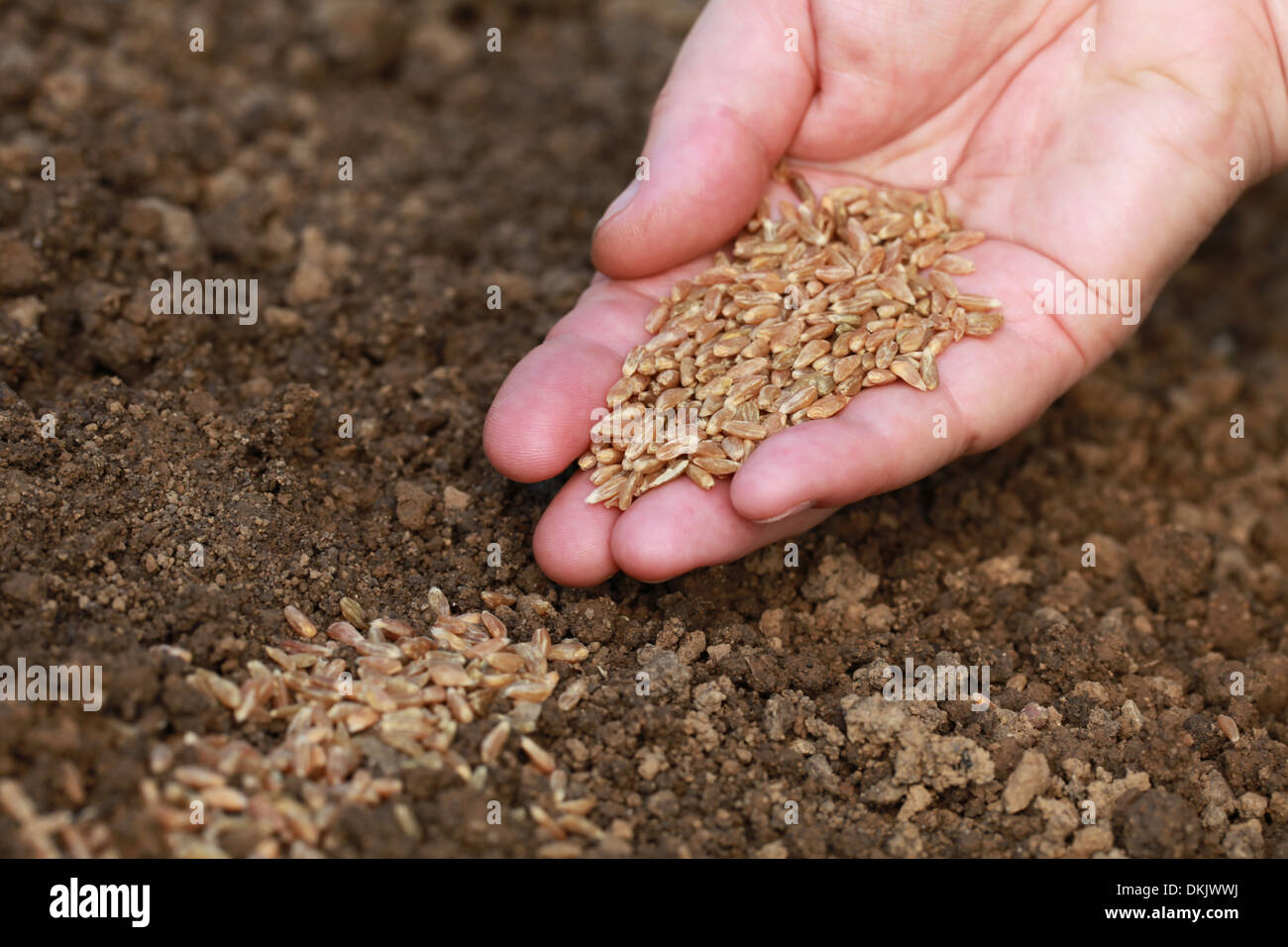 a hand is sowing seeds in the dirt in a garden - Garden Dirt