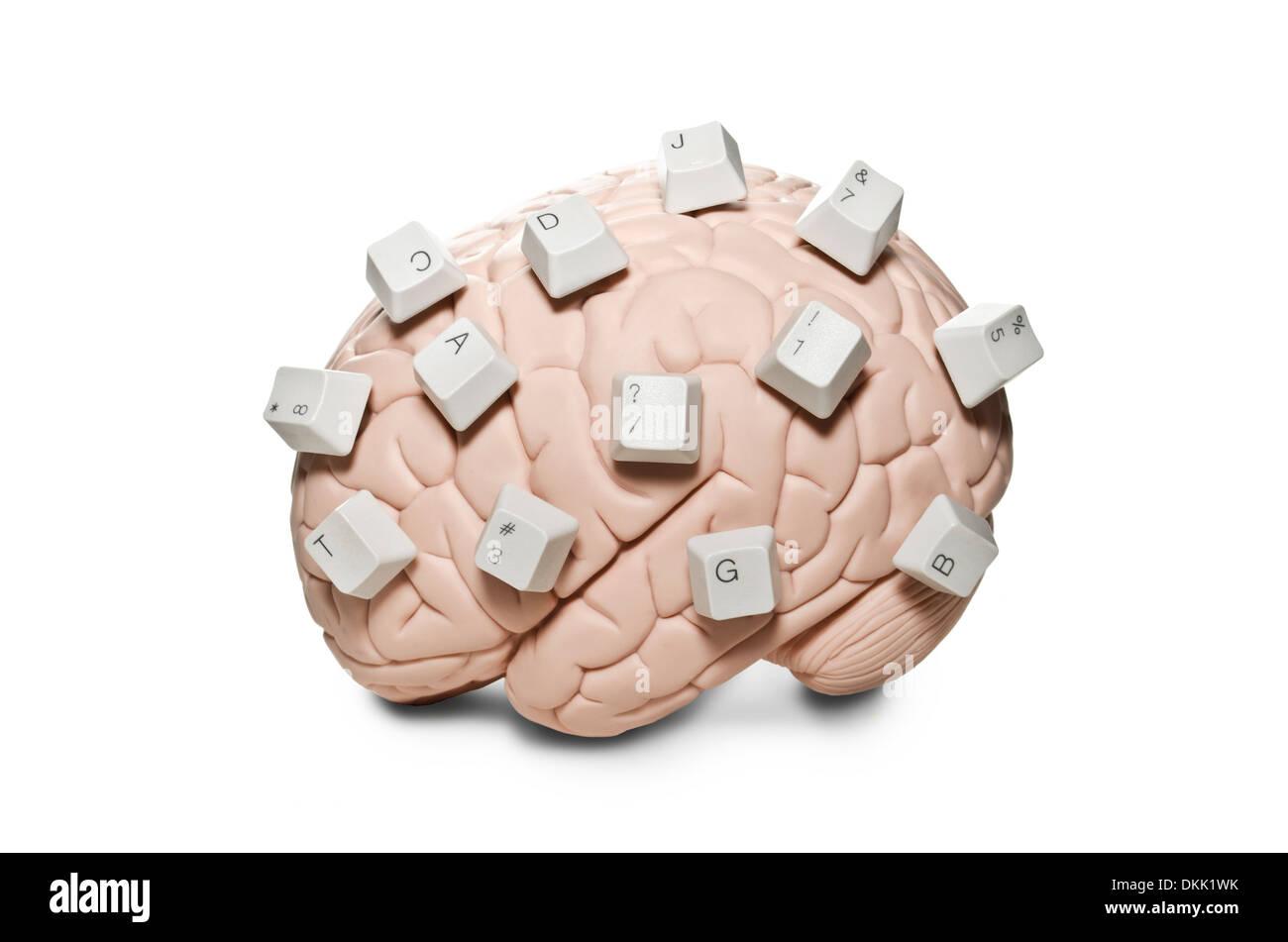 Brain with computer keys - Stock Image