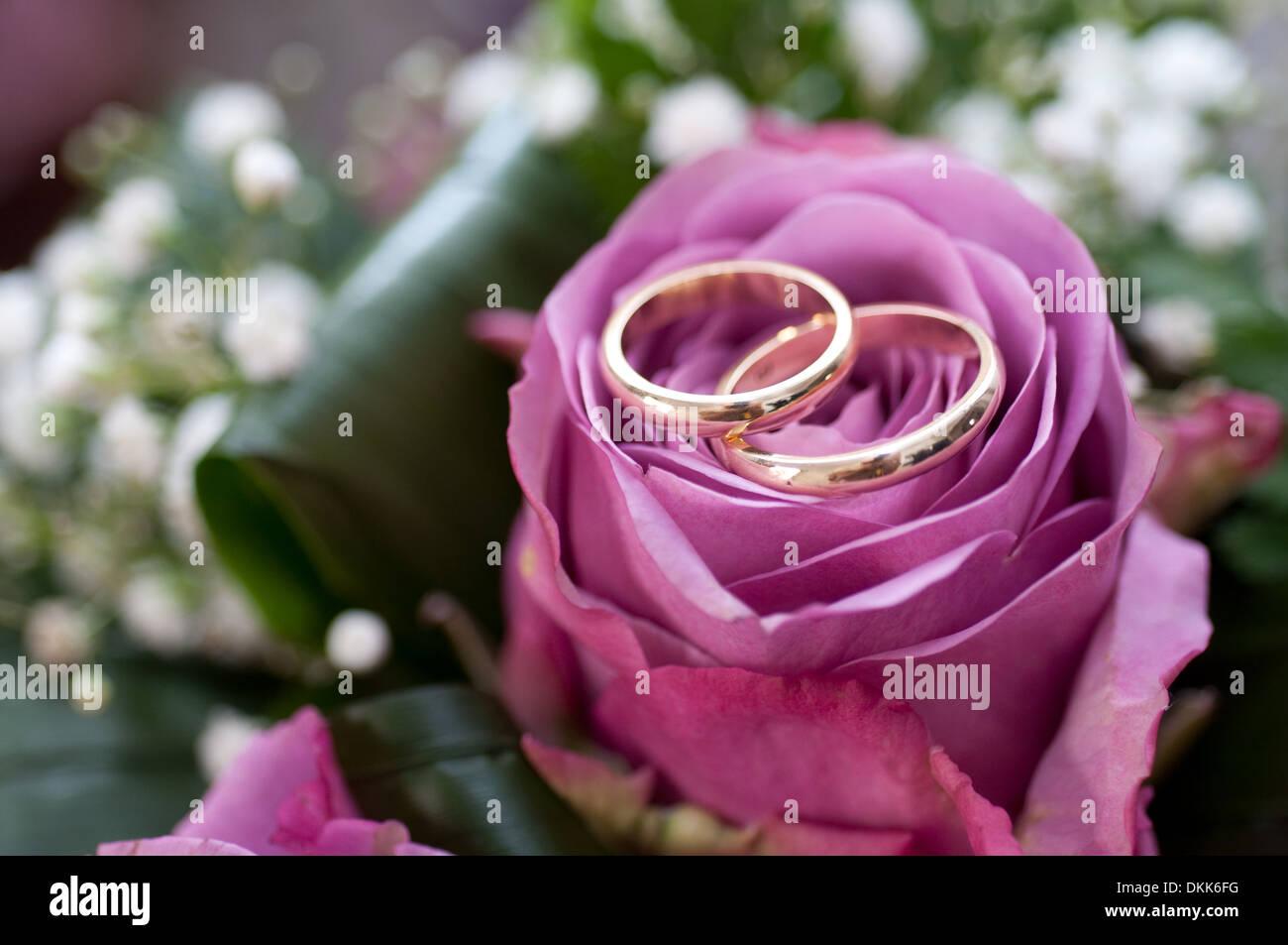 Wedding Rings On Rose Stock Photos & Wedding Rings On Rose Stock ...
