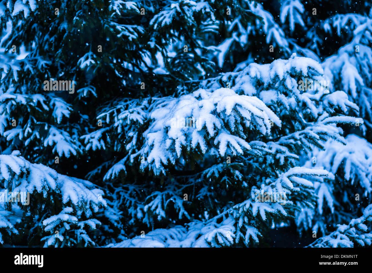 Countryside Xmas Christmas Holidays Stock Photos