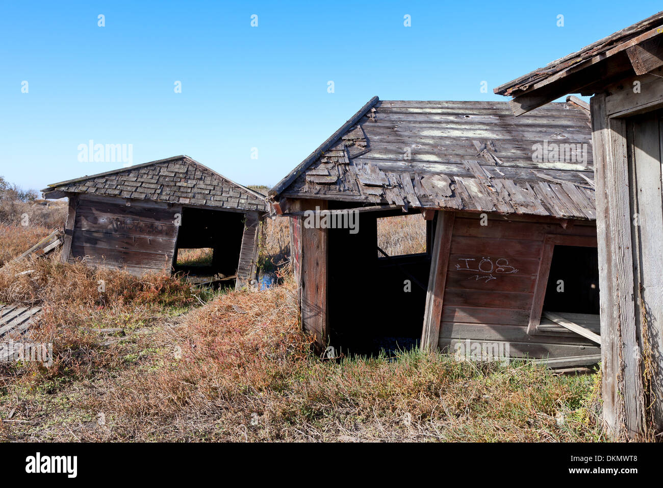 Abandoned shacks slowly sink into the marsh at the ghost town of Drawbridge in southern San Francisco Bay. - Stock Image
