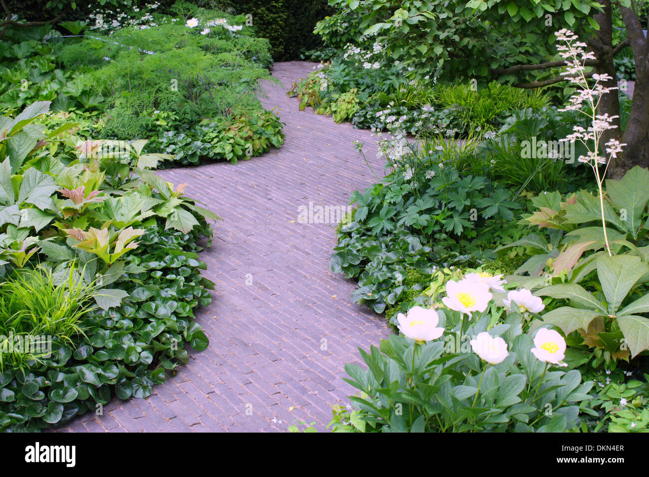 Stone paving in between green plants in a garden Stock Photo
