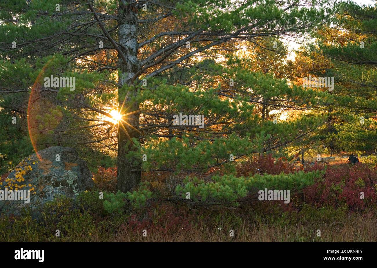 A sunstar shines through the trees during autumn in Torrance Barrens Dark sky Preserve, Muskoka, Ontario, Canada. - Stock Image