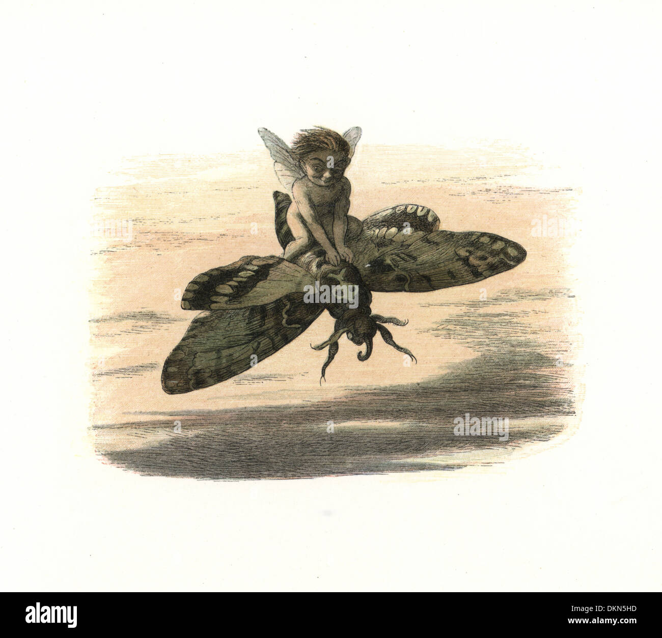 Elf riding a death's-head hawkmoth in the evening. - Stock Image