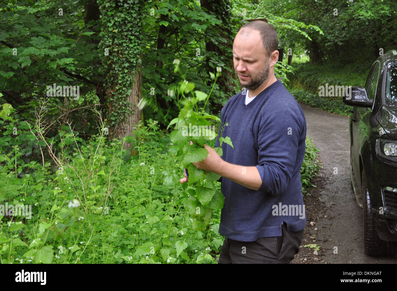 Simon Rogan, chef and owner of Michelin starred restaurant L'enclume foraging in Cumbria - Stock Image