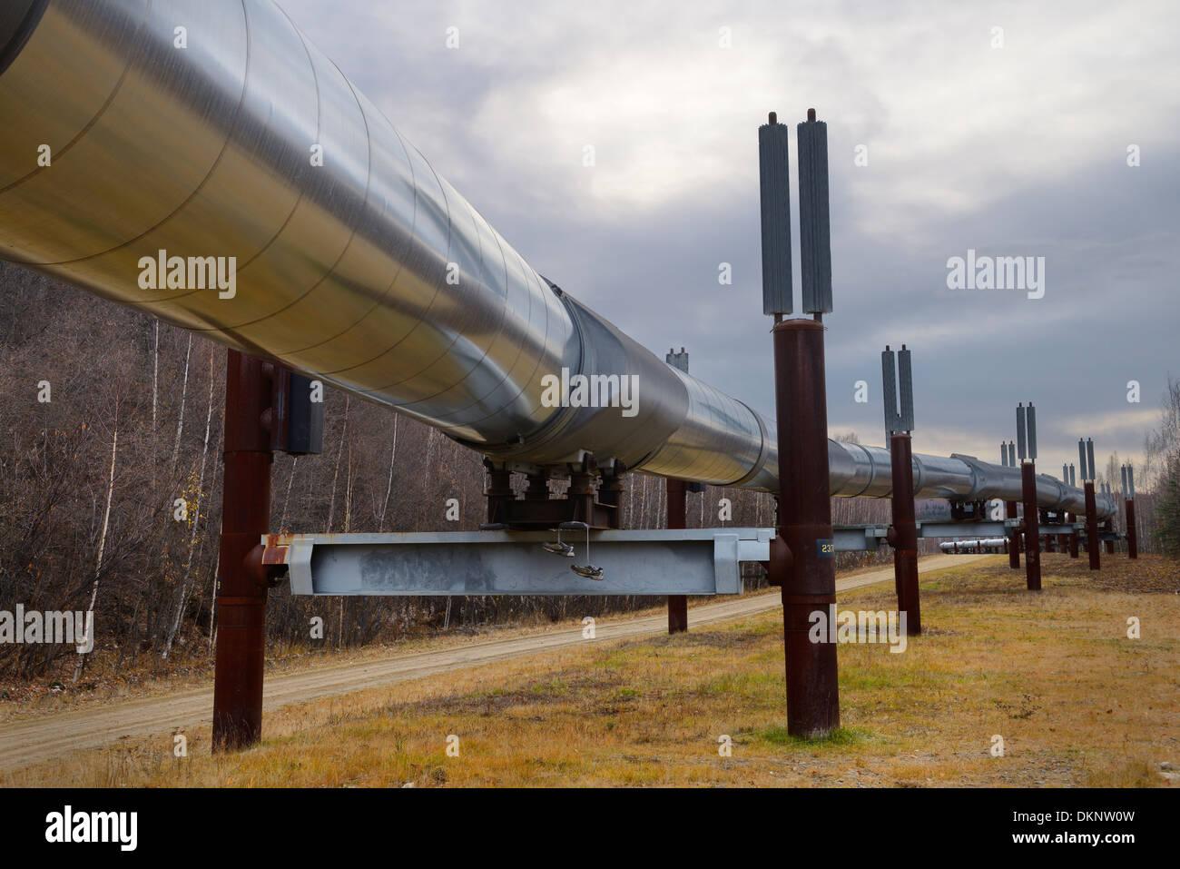 Alyeska elevated Trans Alaska Oil Pipeline system with passive refrigeration columns near Fairbanks Alaska USA - Stock Image