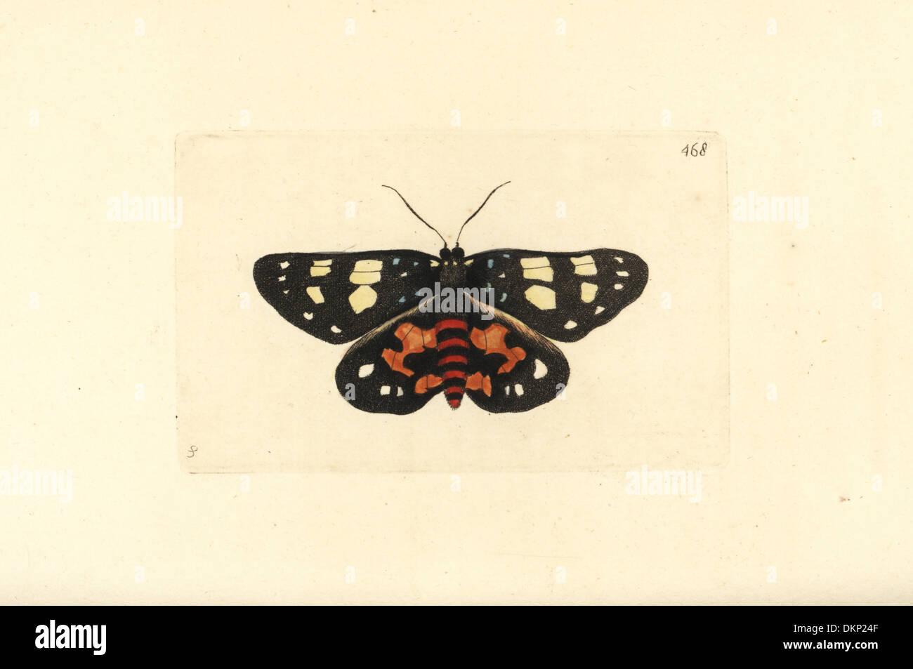 Episteme moth Episteme lectrix szechuanensis (Lectrix moth Phalaena lectrix). Rare moth native to China. Illustration drawn by - Stock Image