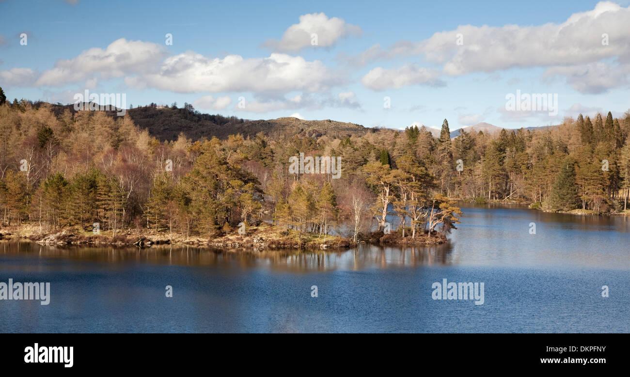 Trees growing along rural lake - Stock Image
