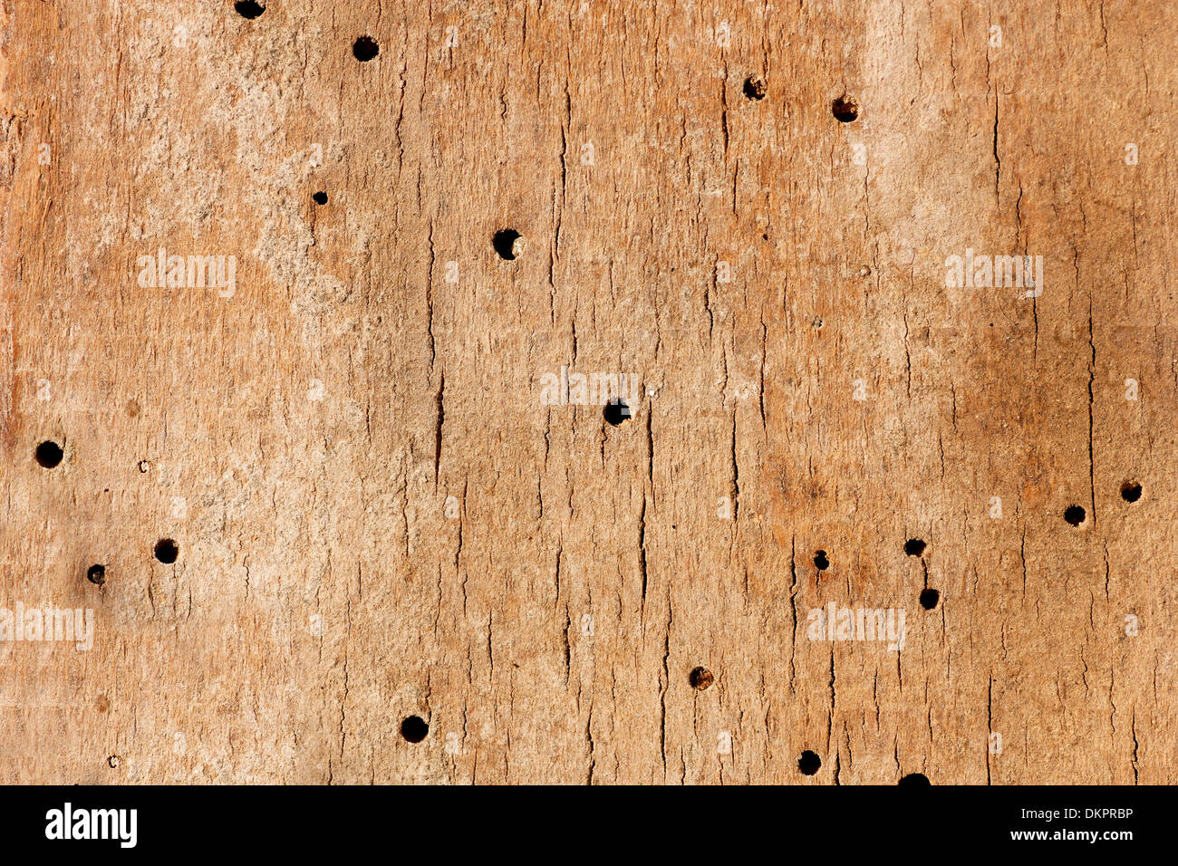 Old Grunge Wooden Texture Or Background With Termite Holes Eaten By Stock Photo Alamy