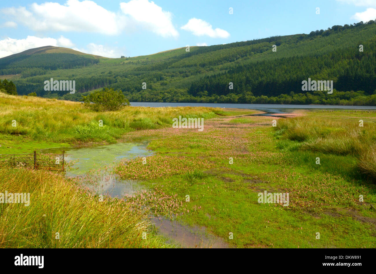 The Caerfanell Stream at Entry into Talybont reservoir - Stock Image