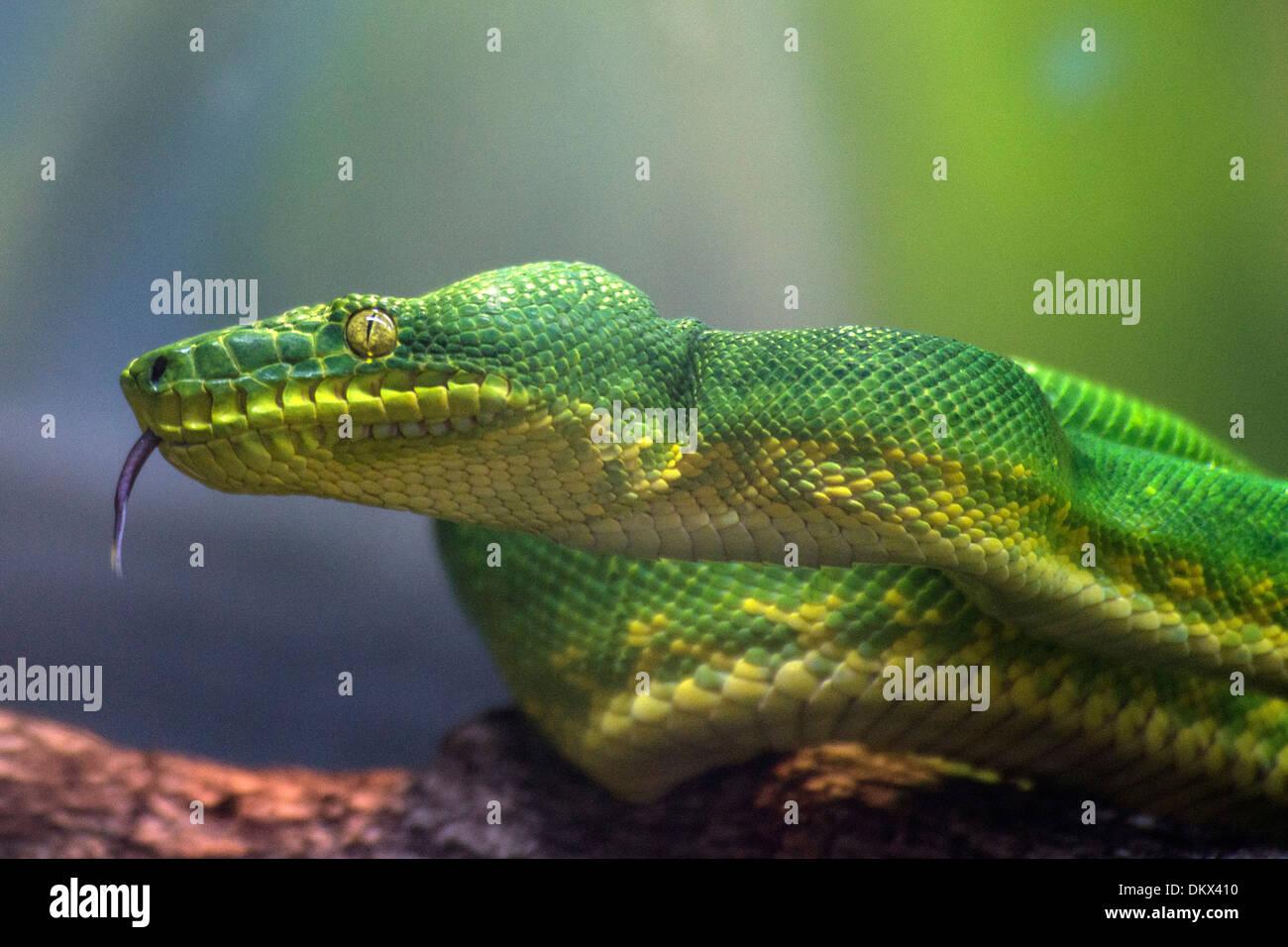 Green Boa Stock Photos & Green Boa Stock Images - Alamy
