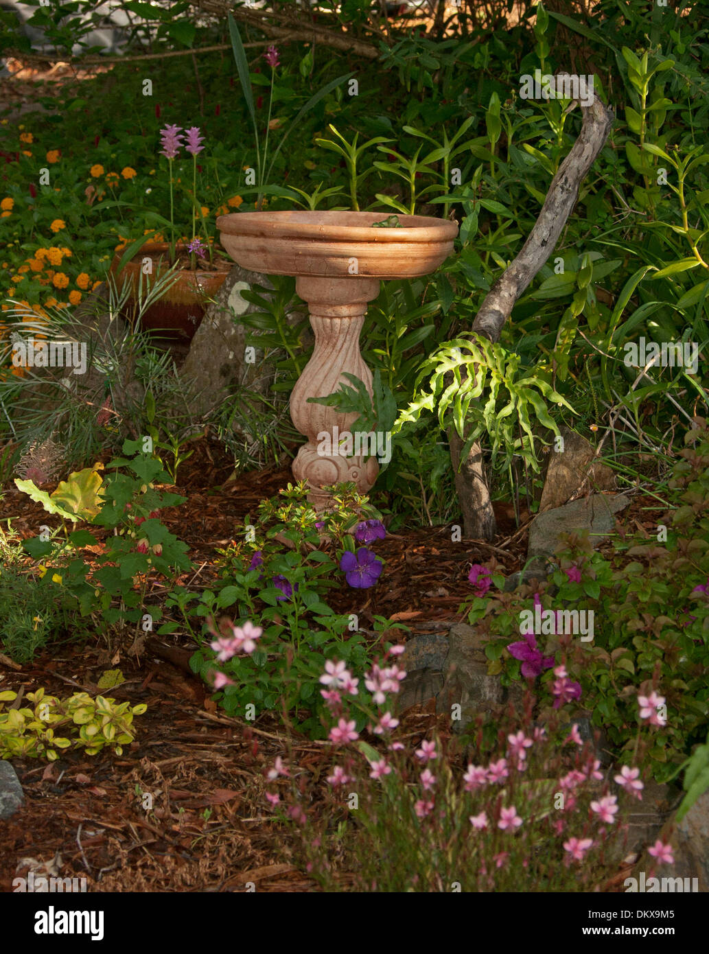 Ornate terracotta bird bath among flowers and colourful perennial ornate terracotta bird bath among flowers and colourful perennial flowering plants and ferns in cottage garden in australia mightylinksfo
