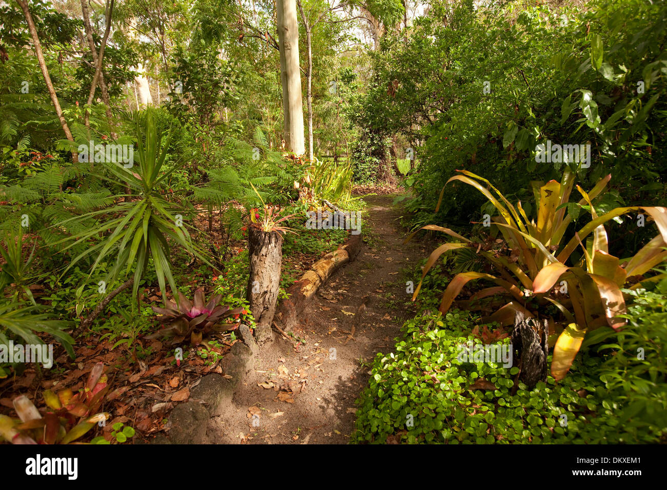 Pathway leading through forested sub-tropical garden with bromeliads ...
