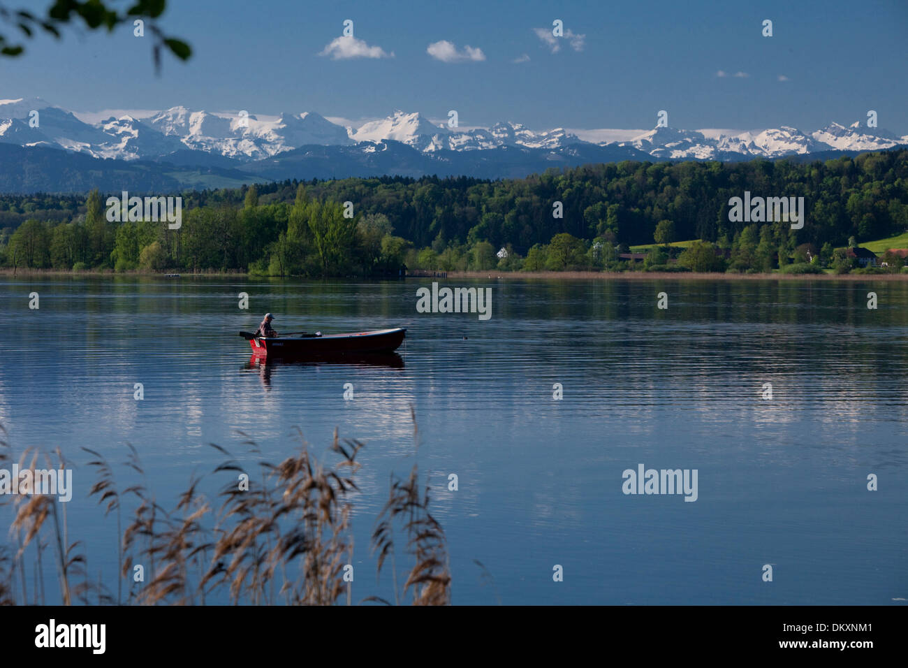 Switzerland, Europe, lake, ship, boat, ships, boats, Alps, canton, ZH, Zurich, spring, Greifensee, Lake Greifen, boat - Stock Image