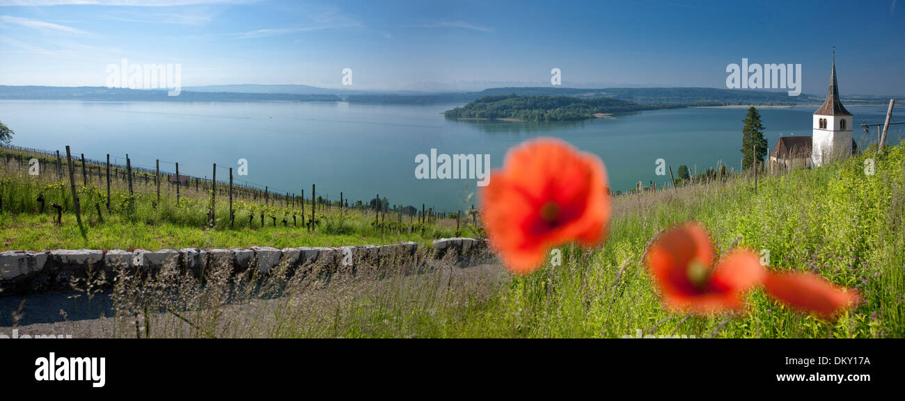 Switzerland, Europe, canton, Bern, village, Ligerz, lake Biel, island, isle, Peter's island, church, religion, panorama, lake, - Stock Image