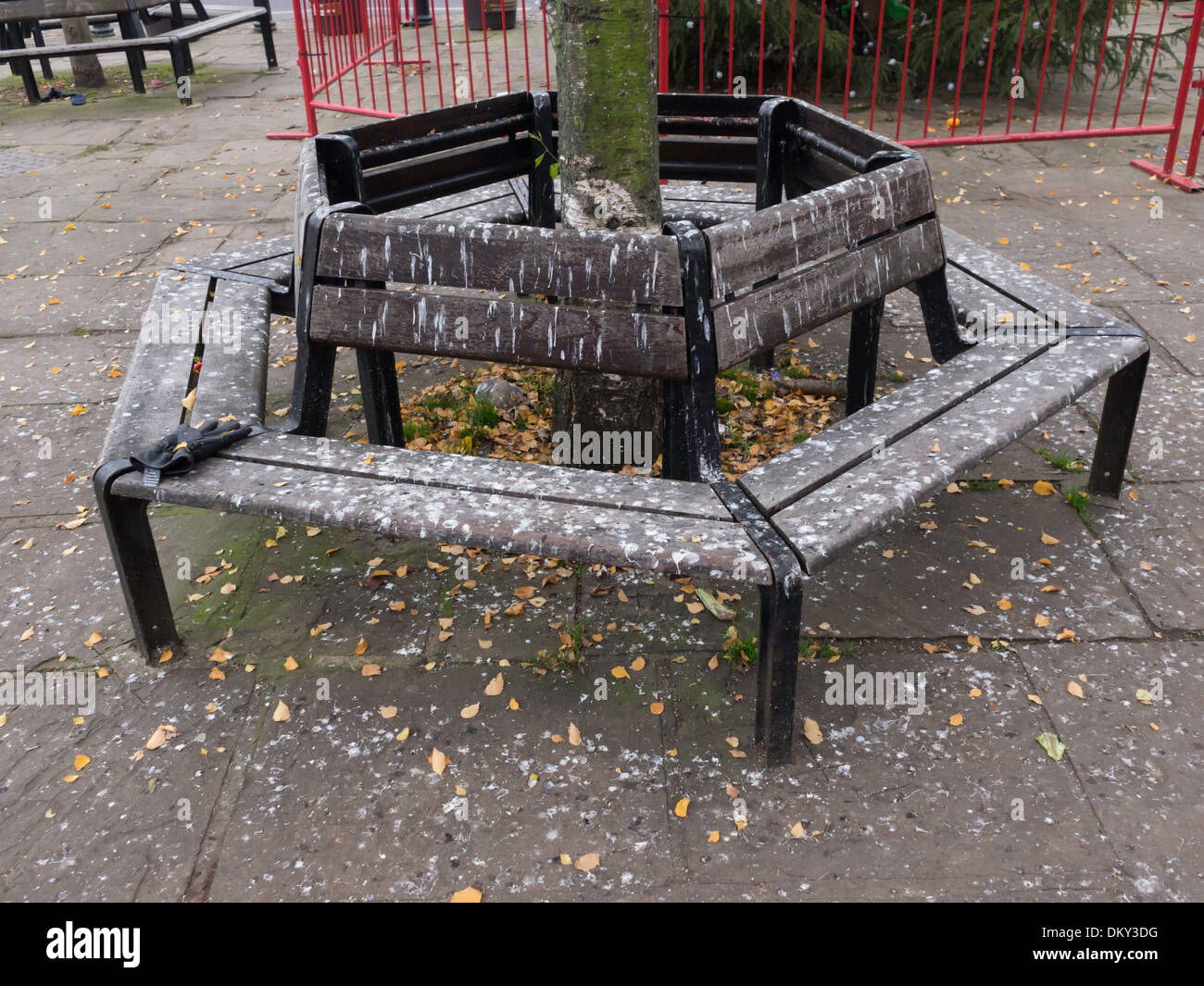 Public seat around a tree in a town square unusable because it is covered with droppings from roosting birds - Stock Image