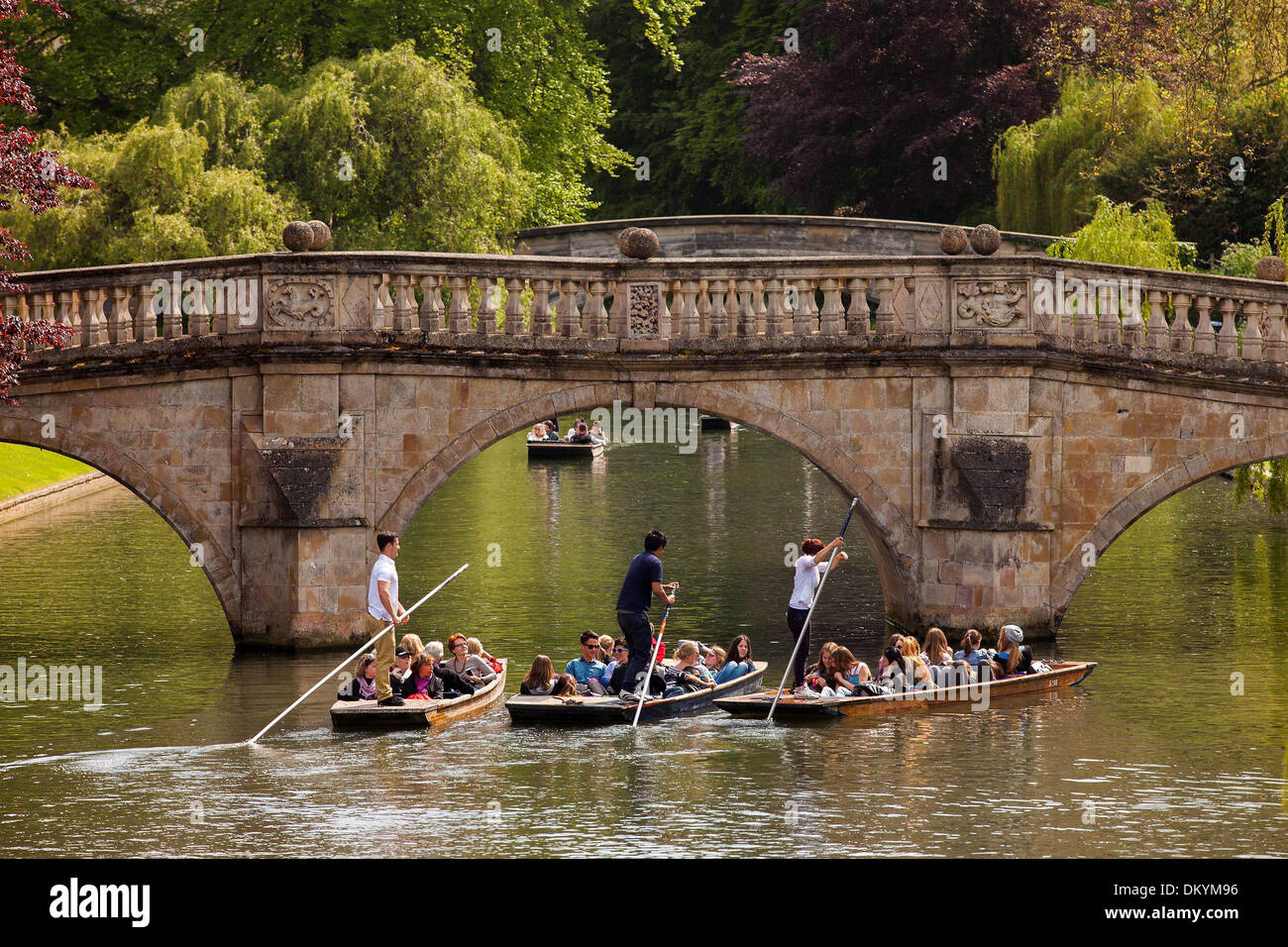 Groups of people punt down the River Cam in Cambridge today, Thursday in the spring sunshine, May 16 2013. - Stock Image