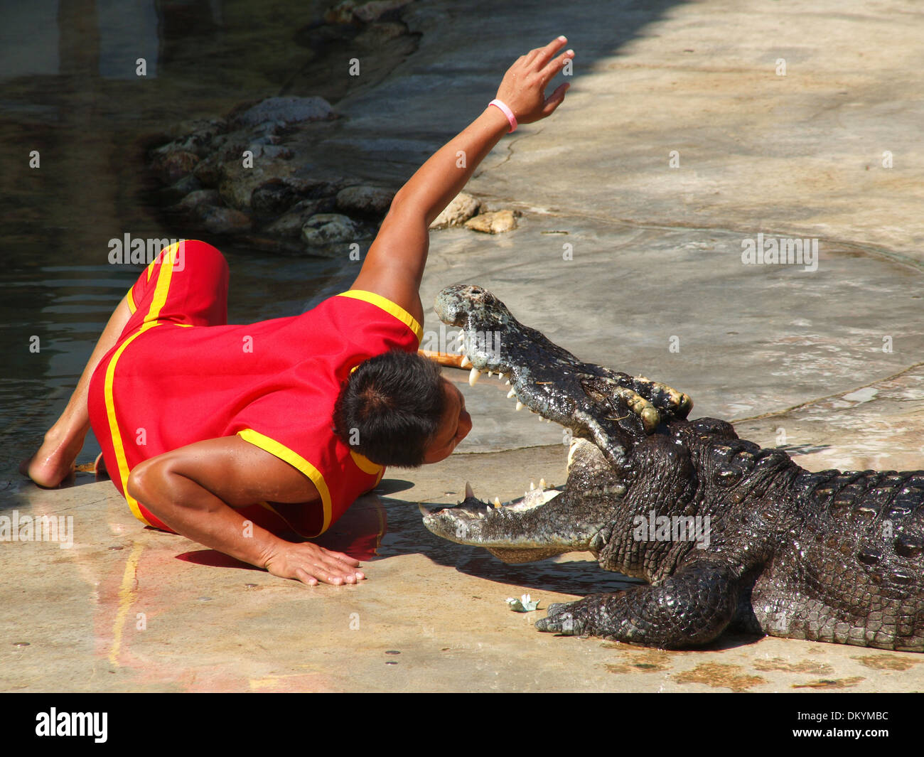 Deadly friendship of a man with a crocodile