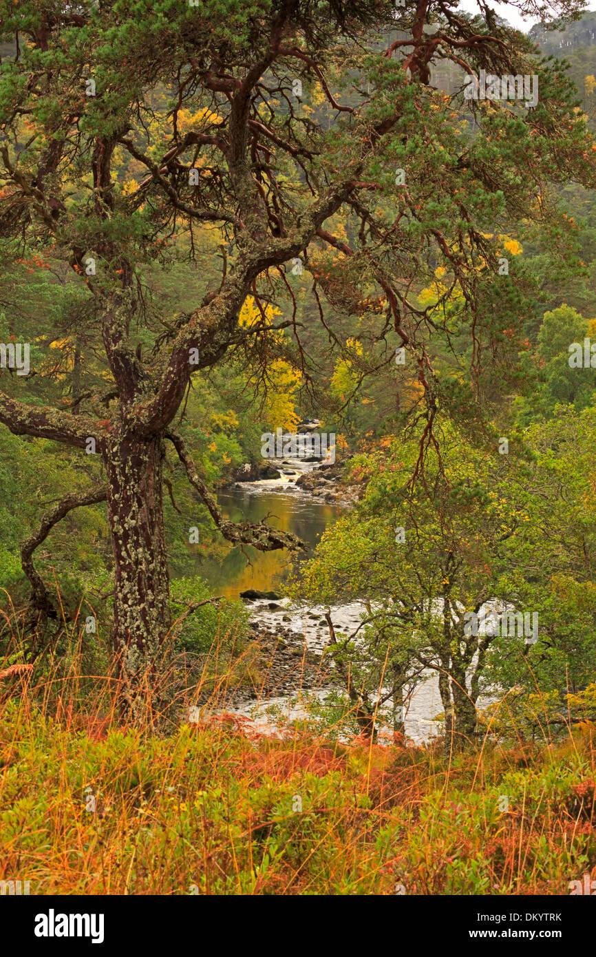 Glen Strathfarrar above the River Farrar, Scottish Highlands - Stock Image
