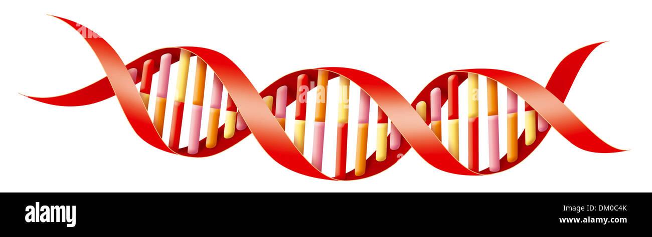 GENETICS, DNA - Stock Image