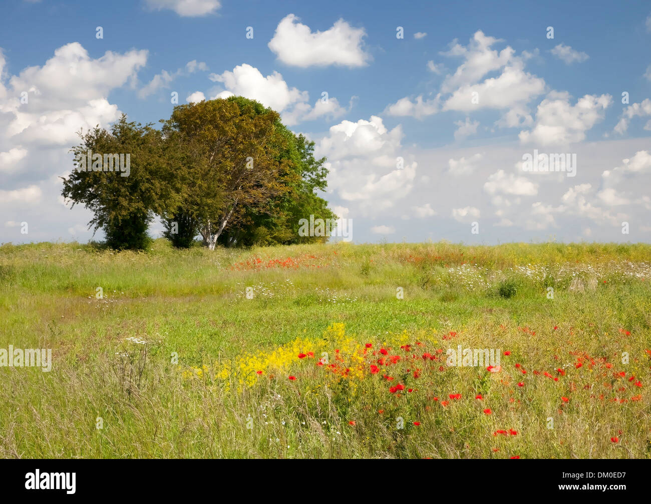 Pretty impressionist style wild flower meadow. - Stock Image