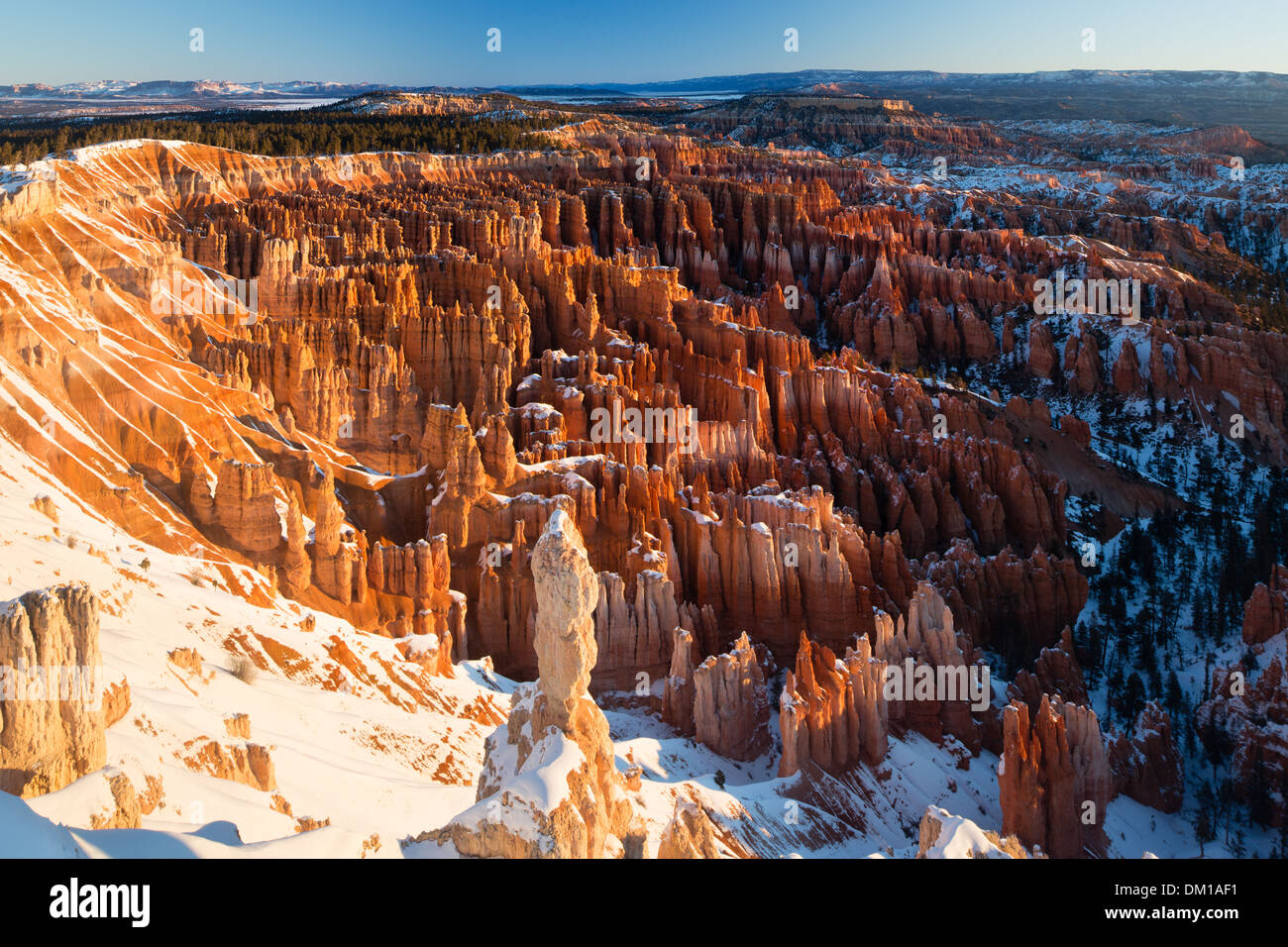 the hoodoos in the Amphitheatre of Bryce Canyon at dawn, Utah, USA - Stock Image