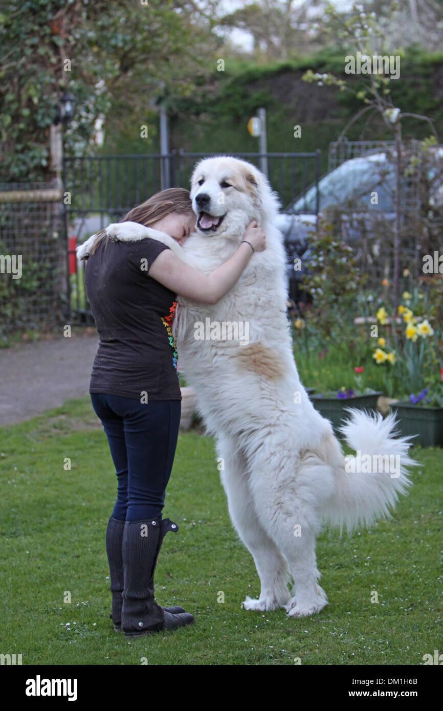 Big Dog Breeds Girl