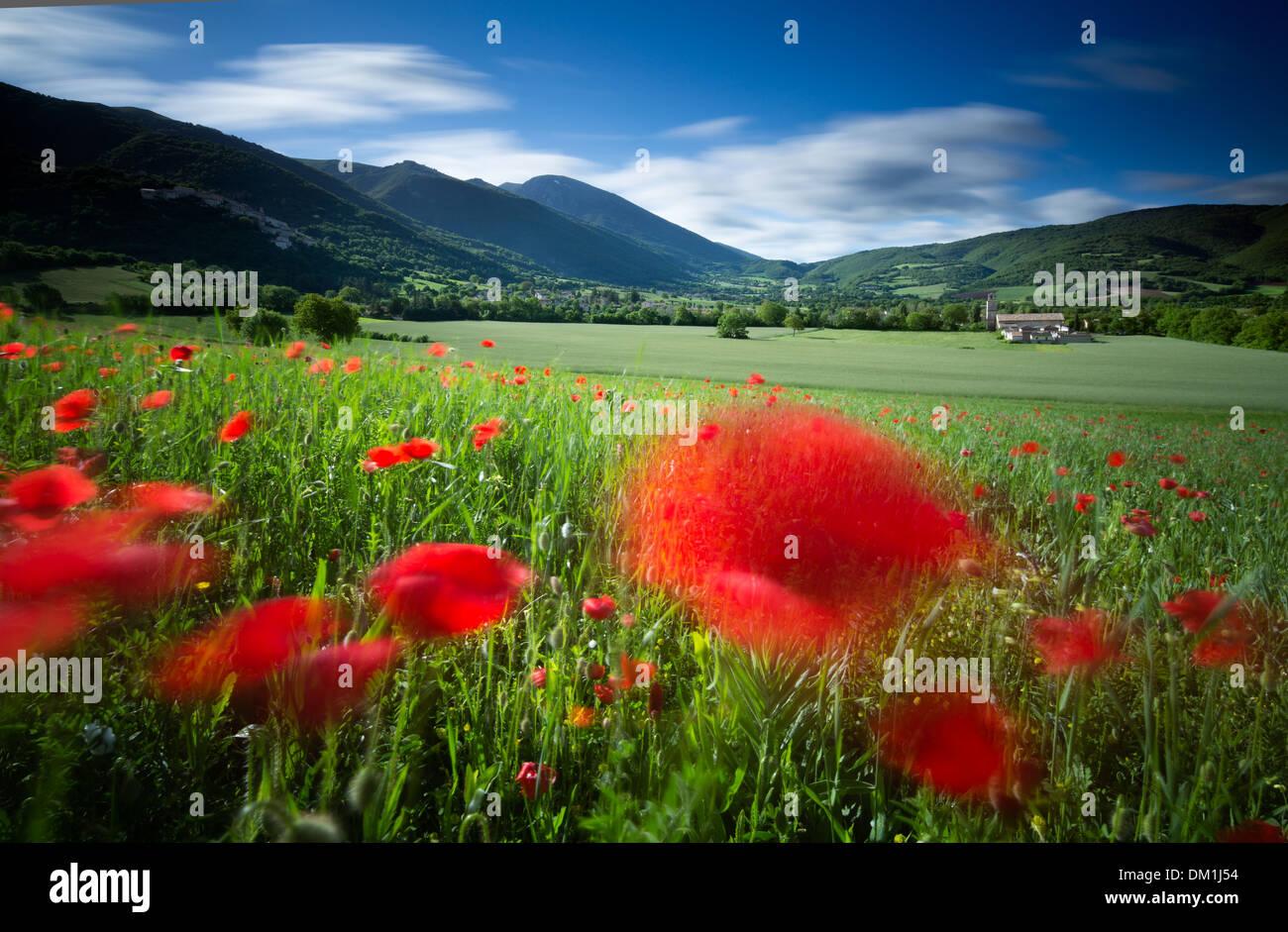 field nr Campi, Umbria, Italy - Stock Image