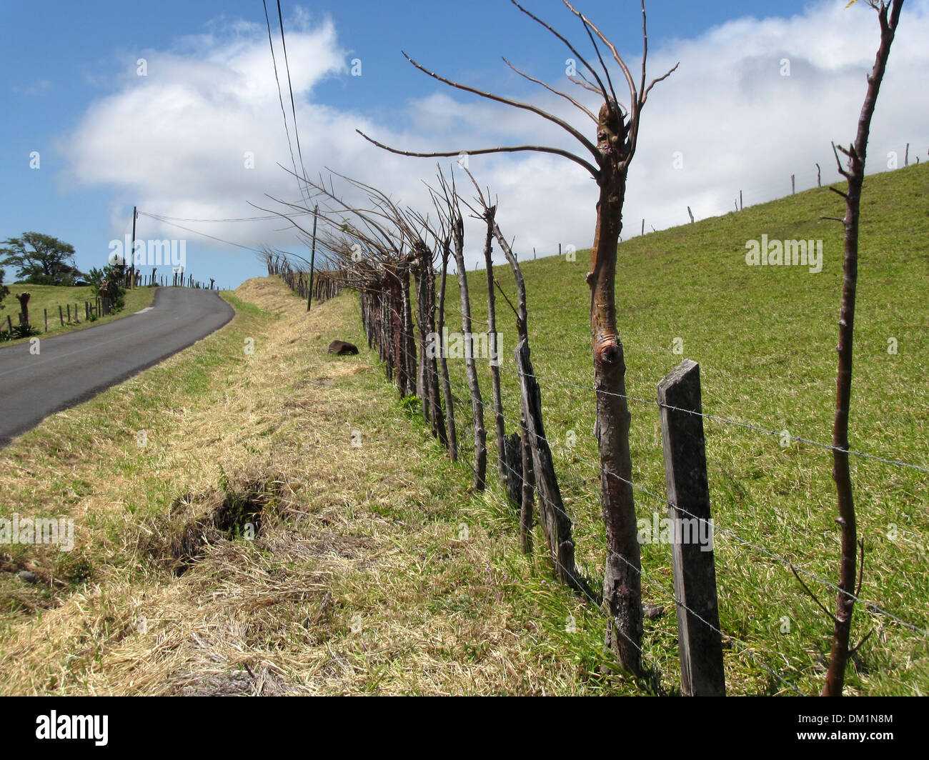 A living fence made of a mixture of posts and live trees protects a farm field, this one in Costa Rica. - Stock Image
