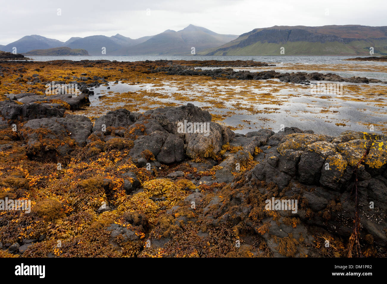 The island of Ulva, looking towards Ben More on the isle of Mull - Stock Image