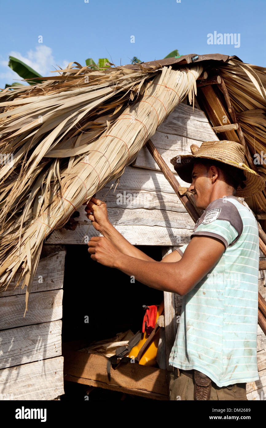 Cuba lifestyle - Thatcher thatching the roof of a farm building, Vinales, Cuba caribbean, Latin America - Stock Image