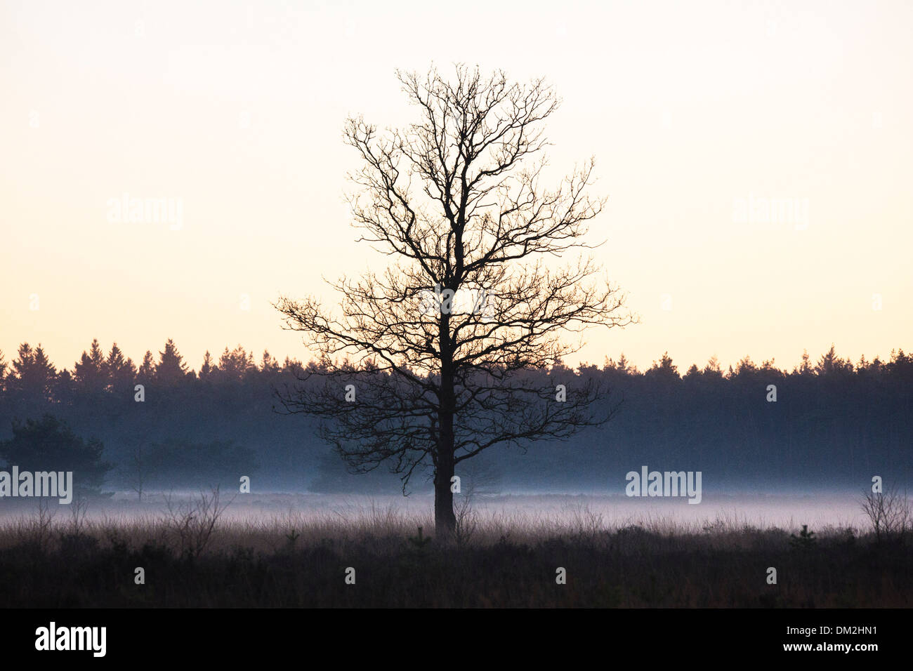 Landscape with low hanging mist at 'de Malpie' in North Brabant in the Netherlands - Stock Image