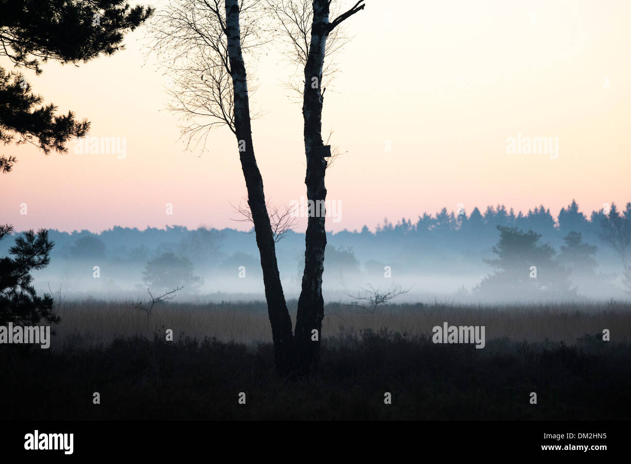 Landscape with low hanging mist at 'de Malpie' in the province North Brabant in the Netherlands - Stock Image