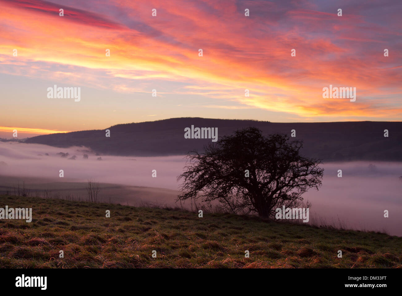 Middleham, Yorkshire, UK. 11th December 2013.  Early morning Weather at Dawn with mist, Fog & Inversion Layer.  Sunrise over moorland in the North Yorkshire Dales. A temperature inversion is a meteorological phenomenon in which air temperature increases with height for some distance above the ground, as opposed to the normal decrease in temperature with height. - Stock Image