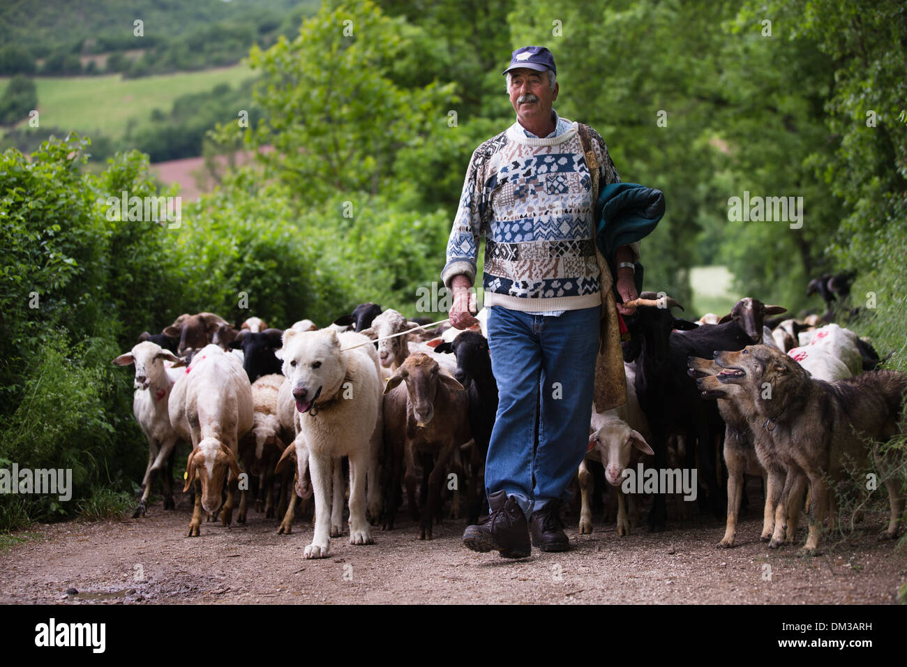Santino the shepherd with his flock, nr Campi, Valnerina, Umbria, Italy - Stock Image