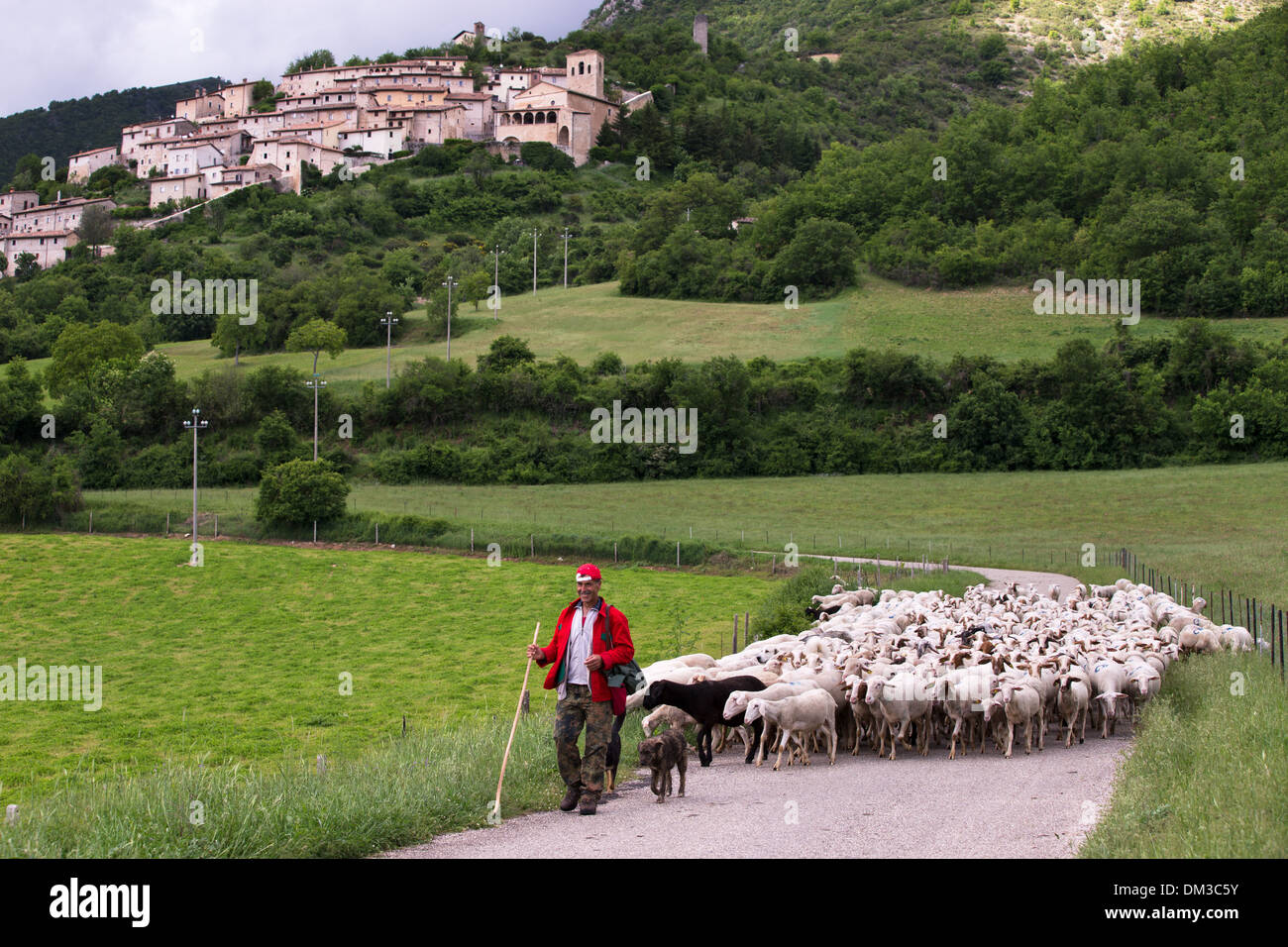 a shepherd with his flock, Campi, Valnerina, Umbria, Italy - Stock Image