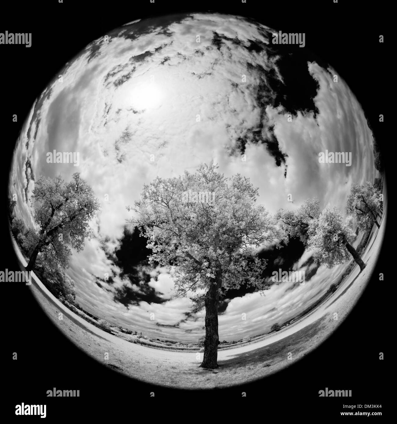 a fisheye & infra-red view of trees nr Milborne Port, Somerset, England - Stock Image