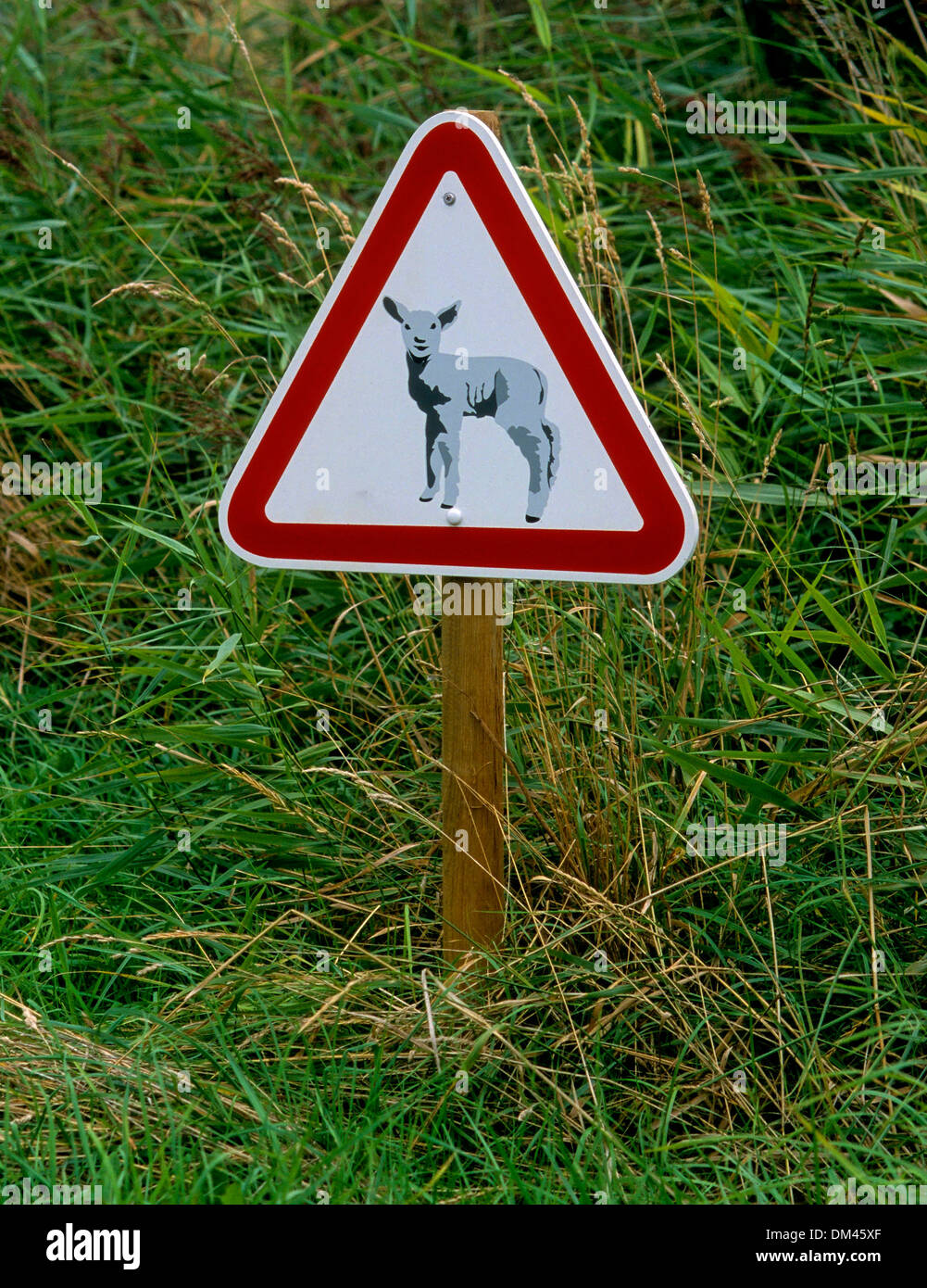 Sign: Caution sheep!, Schild: Achtung Schafe! - Stock Image