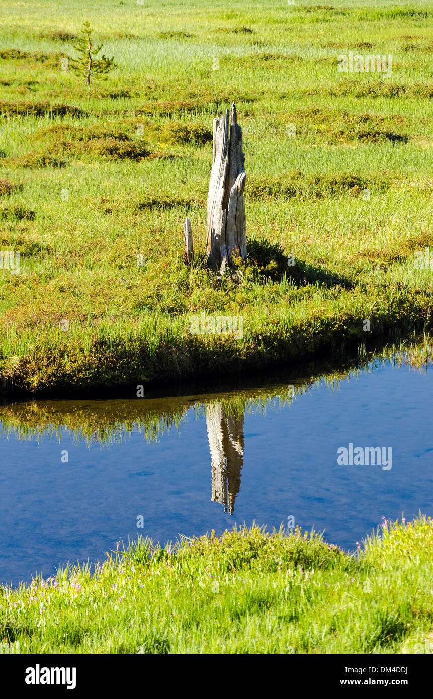 Reflection of a tree stump in crystal clear water - Stock Image